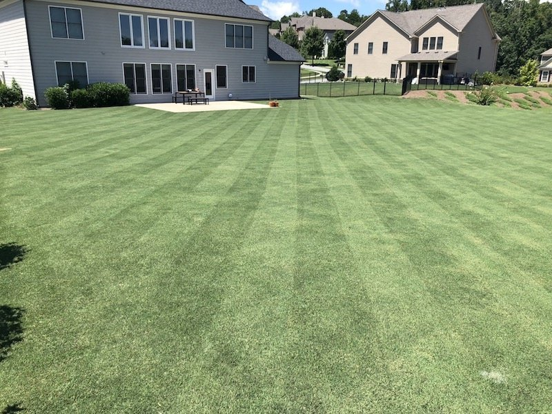 Step-By-Step Guide for Getting a Golf Course Lawn - Ron Henry